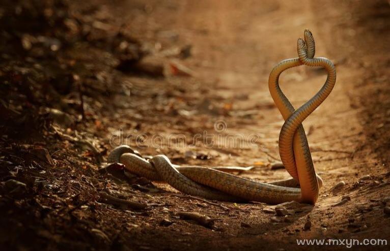 孕妇梦见两条蛇
