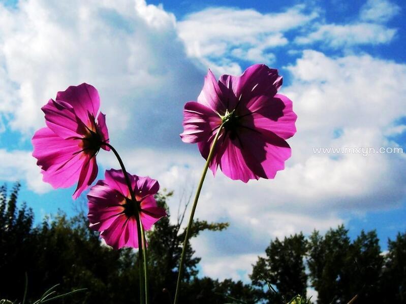 女人梦见花