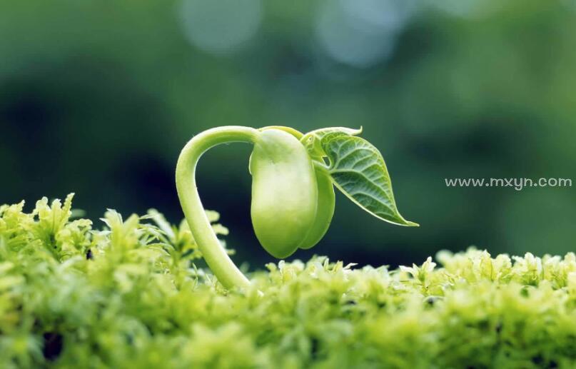 梦见植物发芽