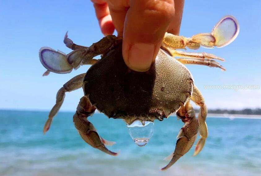 梦见被螃蟹夹手