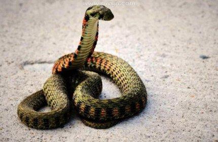 梦见被大蛇追