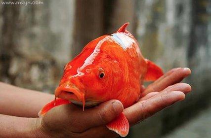 女人梦见红鲤鱼