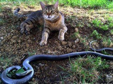 梦见蛇和猫
