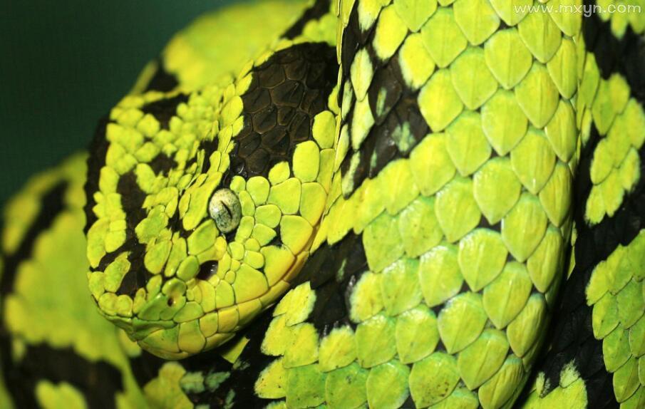 女人梦见大蟒蛇追自己