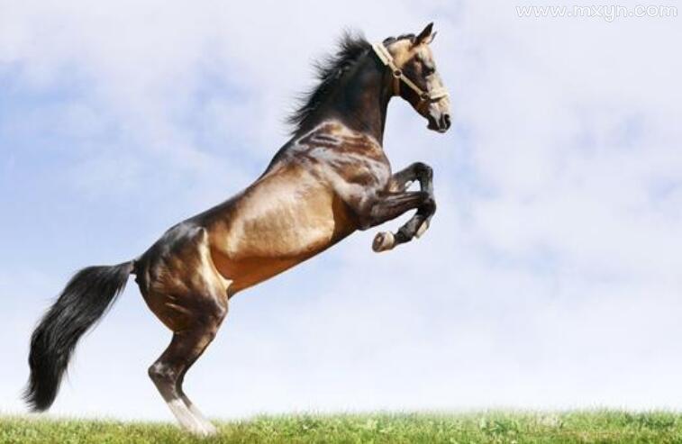 孕妇梦见骑马
