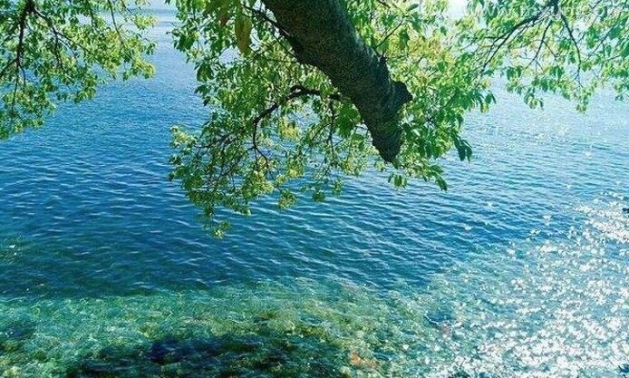 梦见很多大鱼在水里游