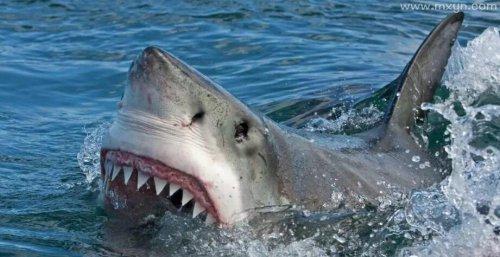 孕妇梦见鲨鱼