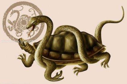 梦见乌龟和蛇