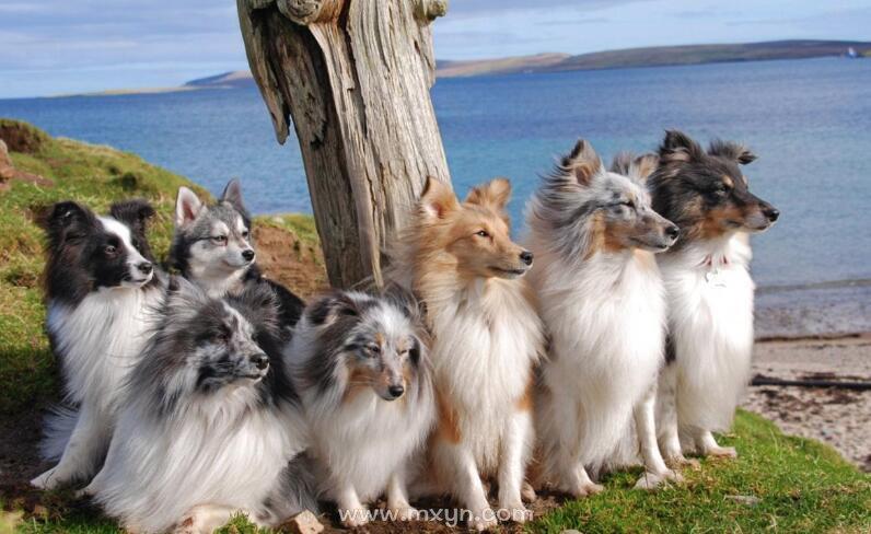 梦见很多狗围着自己