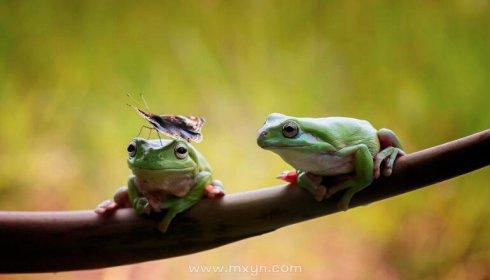 做梦梦见青蛙